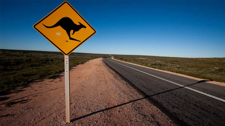 Rural Road In Australia With A Kangaroo Warning Street Sign